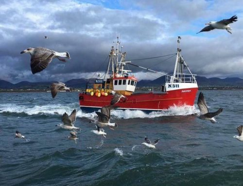 Trial of fisheries bycatch reduction tool on the west of Scotland – new App now available